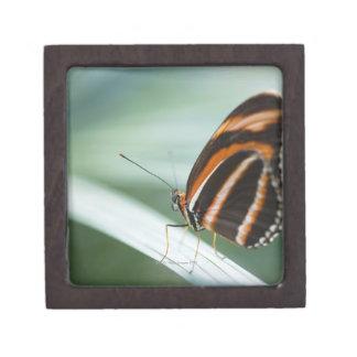 Zebra Long Wing Butterfly Gift Box