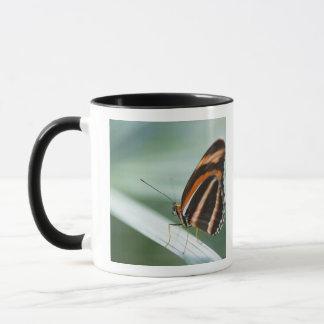 Zebra Long Wing Butterfly Mug