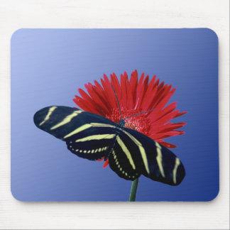 Zebra Longtail on a Daisy Mouse Pad