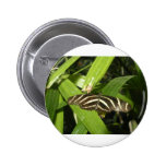 Zebra Longwing Butterfly 2 Inch Round Button