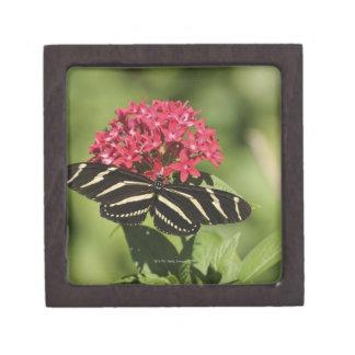 Zebra longwing butterfly, Heliconius Keepsake Box