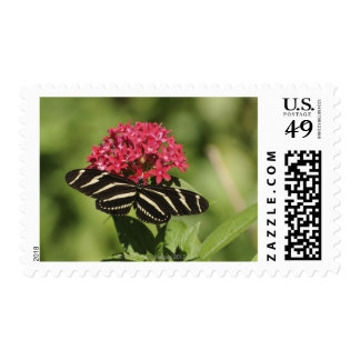 Zebra longwing butterfly, Heliconius Postage Stamp