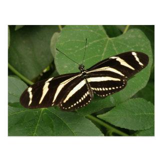 Zebra Longwing Butterfly Postcard