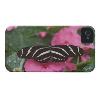 Zebra Longwing, Heliconius charitonius Case-Mate iPhone 4 Case