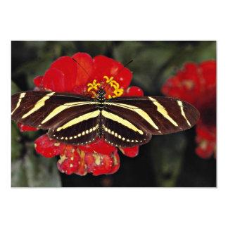 Zebra Longwing, Heliconius charitonius  flowers 5x7 Paper Invitation Card