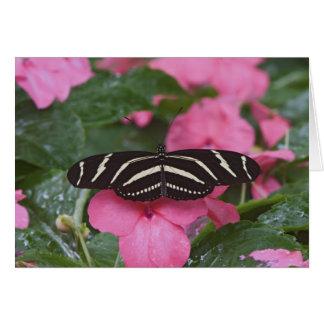 Zebra Longwing, Heliconius charitonius Greeting Card