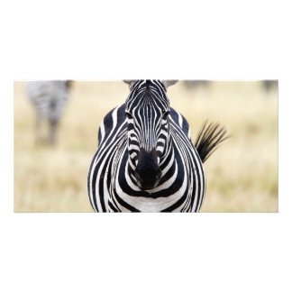 Zebra looking at you card