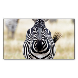 Zebra looking at you magnetic business card