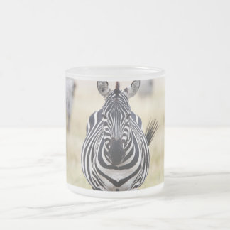 Zebra looking at you 10 oz frosted glass coffee mug