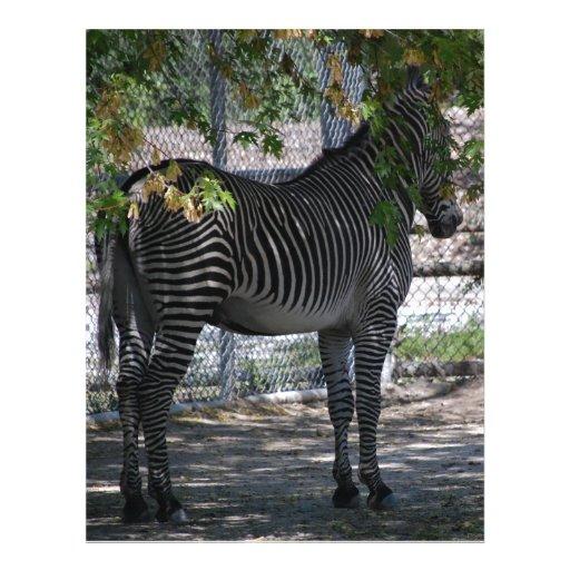 Zebra Love Letterhead