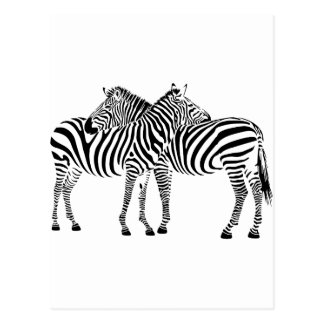 Zebra Love Postcard