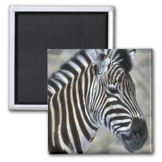 Zebra Lovers Art Gifts 2 Inch Square Magnet
