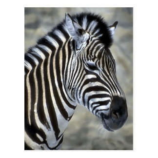 Zebra Lovers Art Gifts Postcard