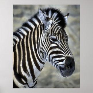 Zebra Lovers Art Gifts Poster