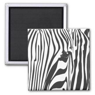Zebra! Magnets