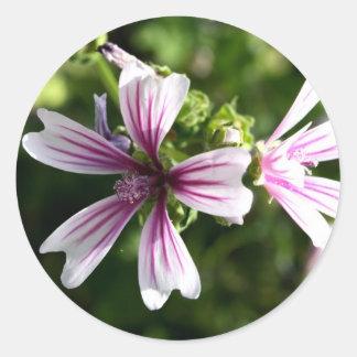 Zebra Mallow (malva sylvestris) Round Sticker