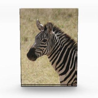 zebra mane acrylic award