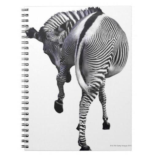 zebra note book