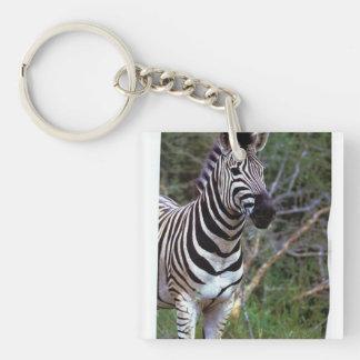 Zebra on key ring keychain
