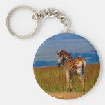 Zebra on the mountain basic round button keychain