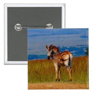 Zebra on the mountain button