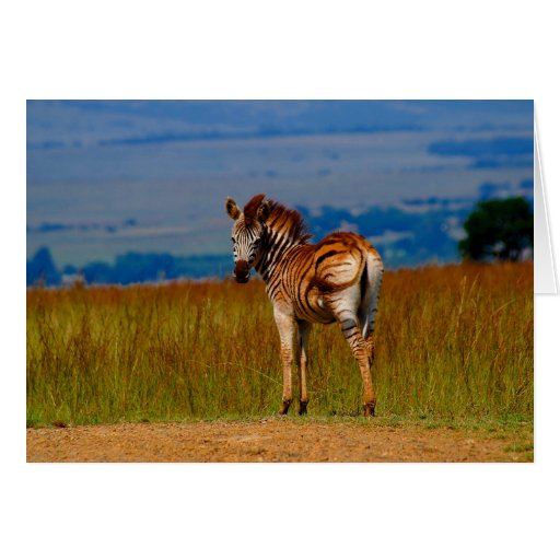 Zebra on the mountain greeting card
