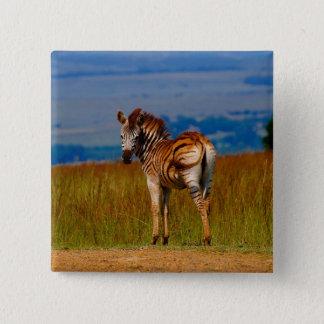 Zebra on the mountain pinback button