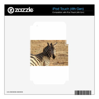Zebra on the Savannah Skins For iPod Touch 4G