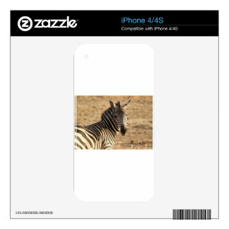 Zebra on the Savannah Skins For The iPhone 4