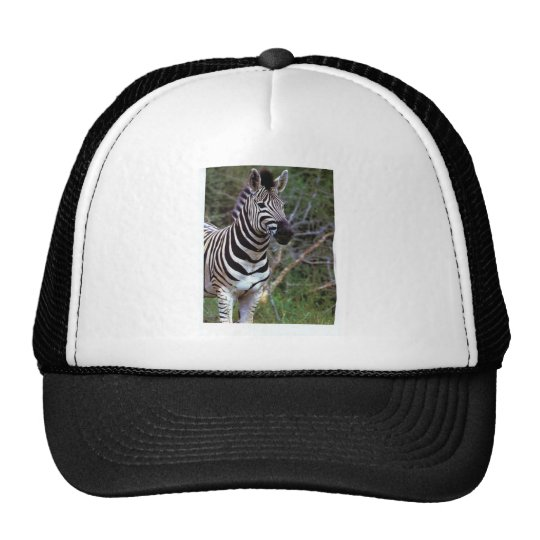 Zebra on white tie trucker hat