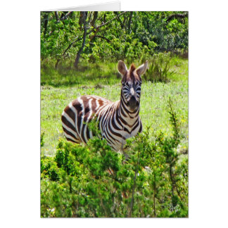 Zebra on Yeager Creek Rd, Johnson City, TX Stationery Note Card