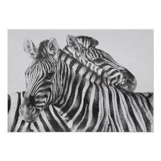 Zebra Original Pencil Drawing Posters