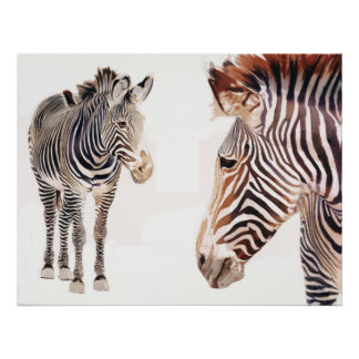 """Zebra Pair"" Watercolor Wildlife Art Poster"