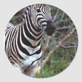 Zebra paper products classic round sticker