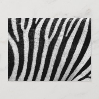 Zebra Pattern Postcards