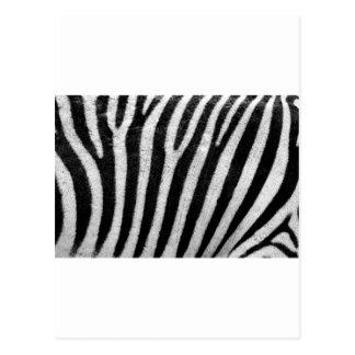 Zebra Pattern Postcard