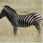 Zebra Photo Cutout