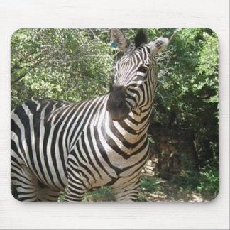 Zebra Photo Design Mouse Pad