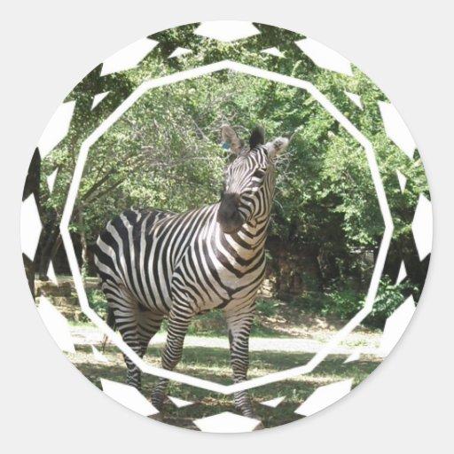 Zebra Photo Design Sticker