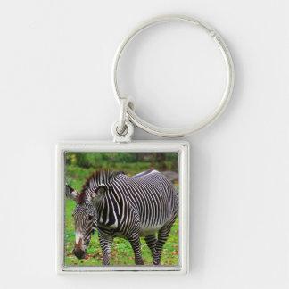Zebra Photo Keychains