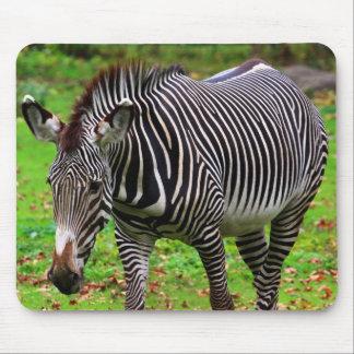 Zebra Photo Mouse Pad