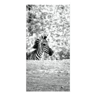 Zebra Photo Card