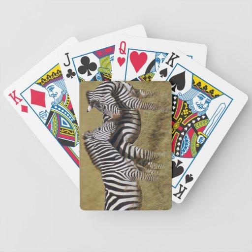 zebra playing cards
