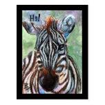 Zebra Portrait ACEO Postcard