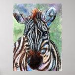 Zebra Portrait ACEO Poster