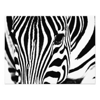 Zebra portrait black and white photographic print