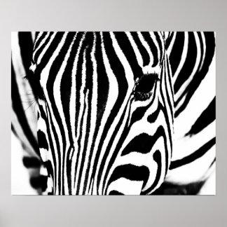 Zebra portrait black and white poster