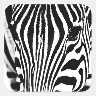 Zebra portrait black and white square sticker