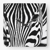 Zebra portrait black and white square wall clock
