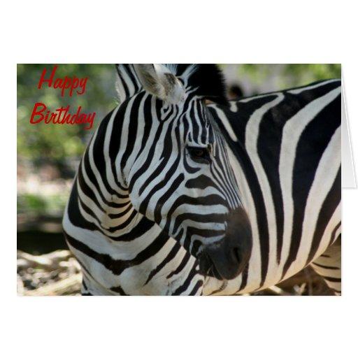 Zebra Pose Birthday Card